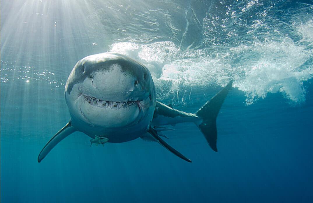 Naked and Afraid Shark Episode